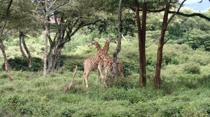 Giraffe Neck Hug :)